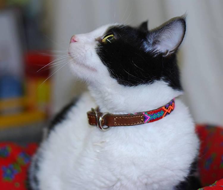mexico-a-colores-blog-collares-para-perro-mascotas-bo-collares-1